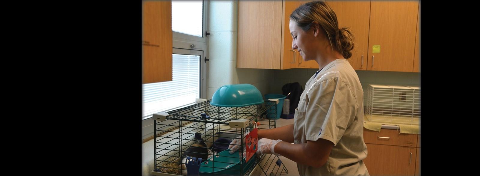 Veterinarian Assistant